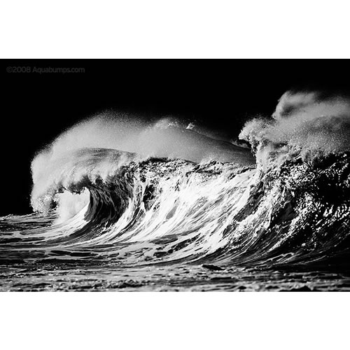 $50 Voucher towards an Aquabumps Black & White Print