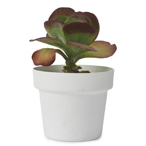 Medium Pot in White