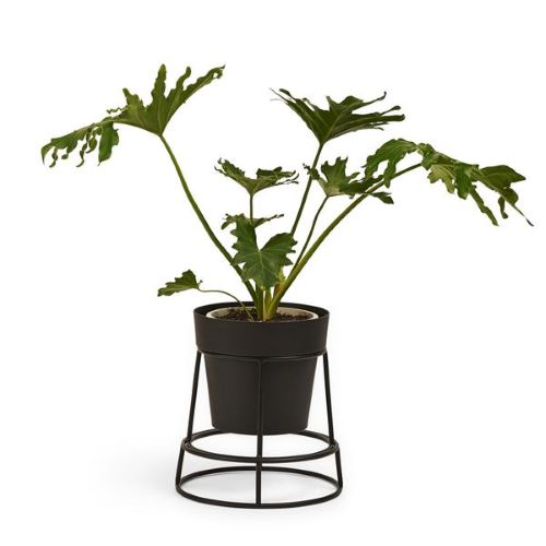 Potplant Stand in Black