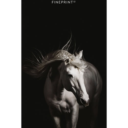 $25 Voucher towards a Horse Print
