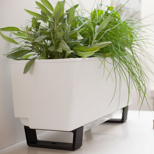 Self Watering Mini Bench Planter